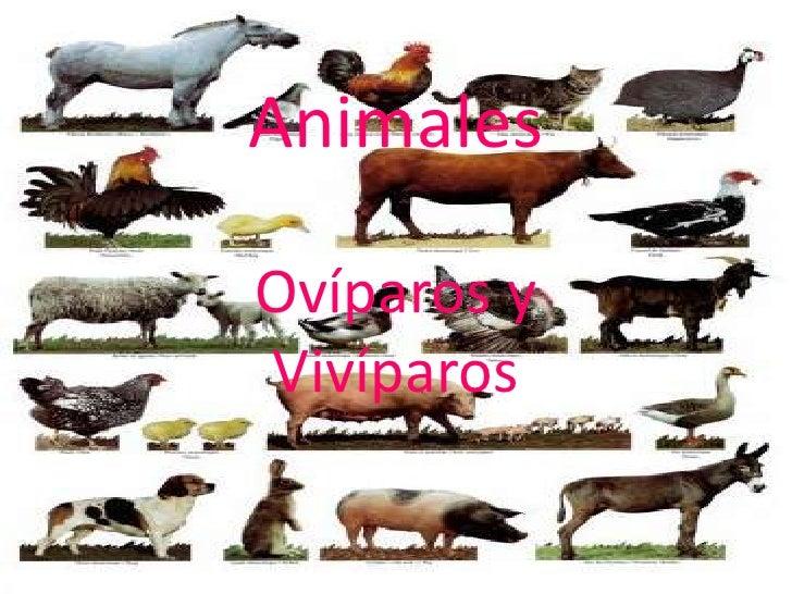 AnimalesOvíparos yVivíparos