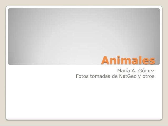 Animales María A. Gómez Fotos tomadas de NatGeo y otros