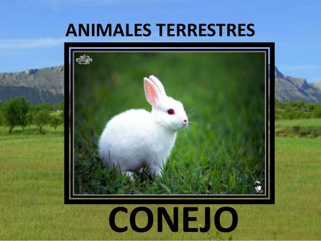 animales terrestres - photo #32