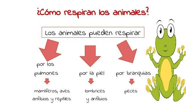 Seres vivos: animales