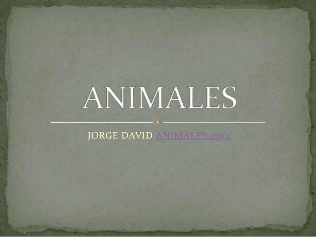JORGE DAVID ANIMALES.pptx