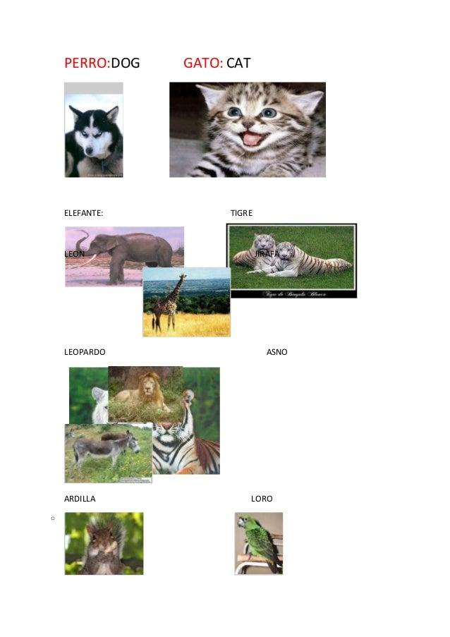 PERRO:DOG GATO: CAT  ELEFANTE: TIGRE  LEON JIRAFA  LEOPARDO ASNO  ARDILLA LORO  o