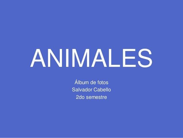 ANIMALES Álbum de fotos Salvador Cabello 2do semestre