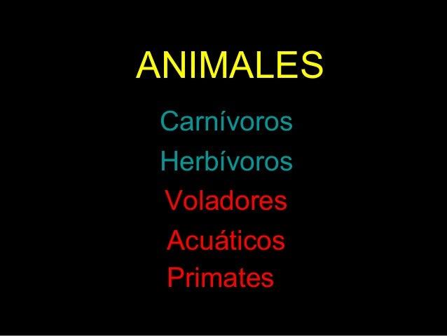 ANIMALES •Carnívoros •Herbívoros •Voladores •Acuáticos •Primates