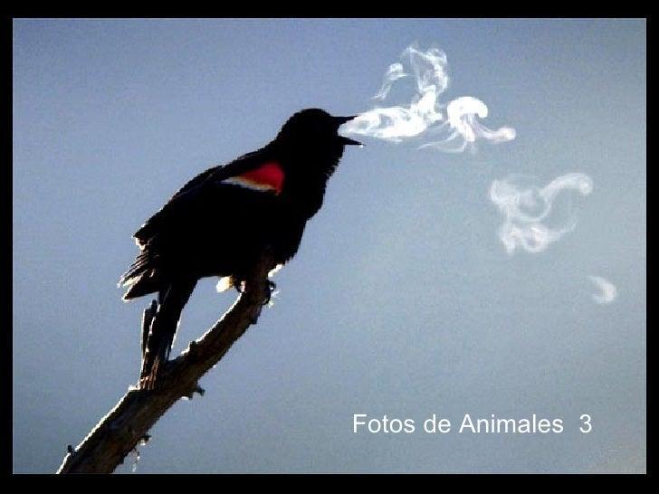 Fotos de Animales  3