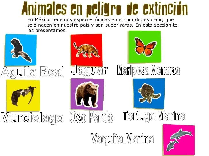 Animales en peligro de extinci n for Pececillo nuevo de cualquier especie