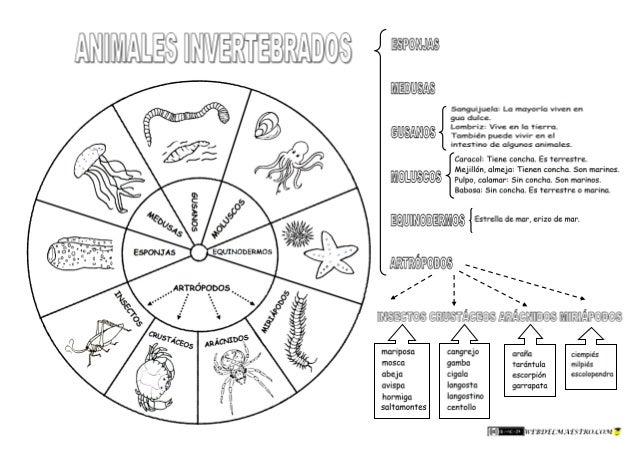 Animales Invertebrados-clasificación-4