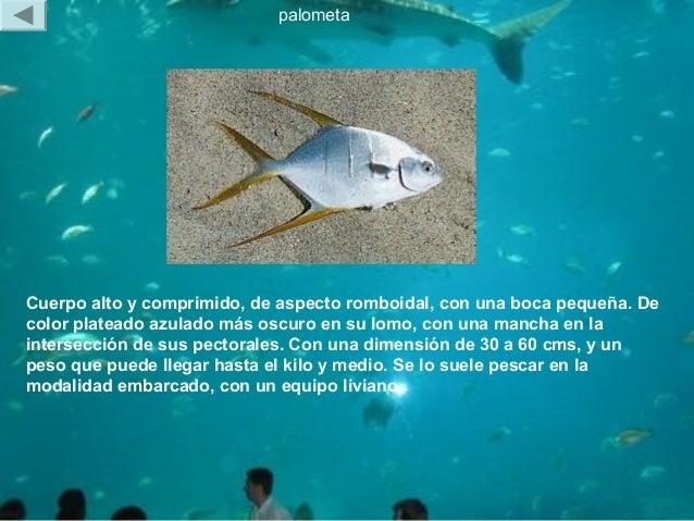 animales marinos 1227790856579428 9