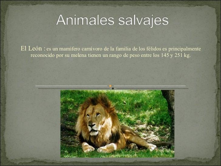 El León :  es un mamífero carnívoro de la familia de los félidos es principalmente reconocido por su melena tienen un rang...