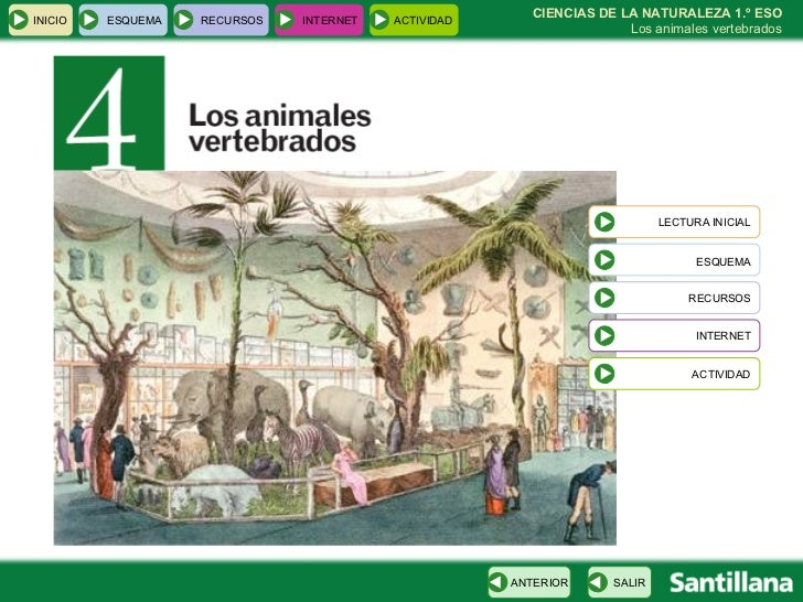 CIENCIAS DE LA NATURALEZA 1.º ESO Los animales vertebrados INICIO ESQUEMA RECURSOS INTERNET ACTIVIDAD LECTURA INICIAL ESQU...