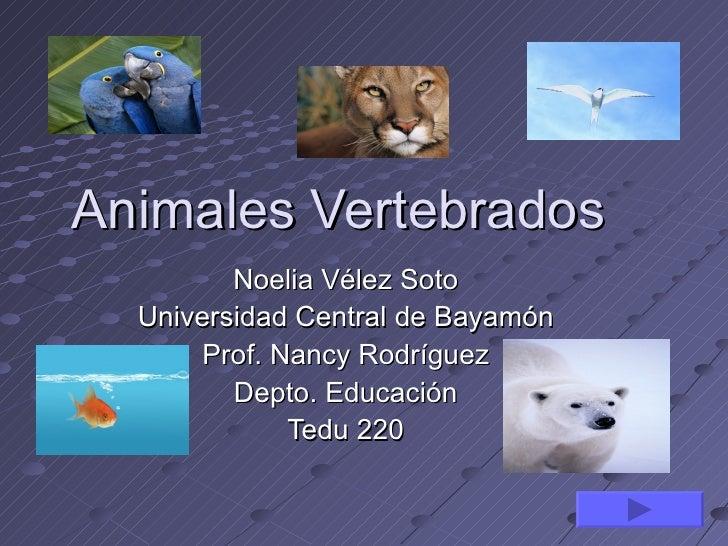 Animales Vertebrados         Noelia Vélez Soto  Universidad Central de Bayamón       Prof. Nancy Rodríguez         Depto. ...