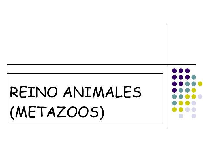 REINO ANIMALES (METAZOOS)