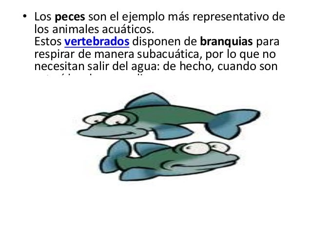 Animales acuaticos for Peces que no necesitan oxigeno