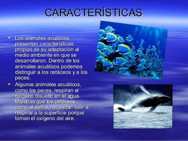 Caracteristicas de animales acuaticos for Como se cultivan los peces
