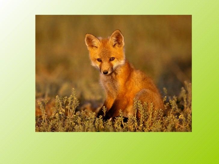 animales terrestres - photo #12