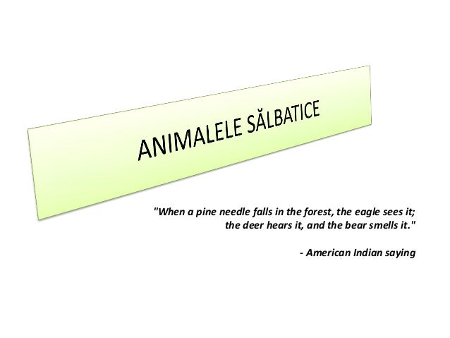 """""""When a pine needle falls in the forest, the eagle sees it;              the deer hears it, and the bear smells it.""""      ..."""
