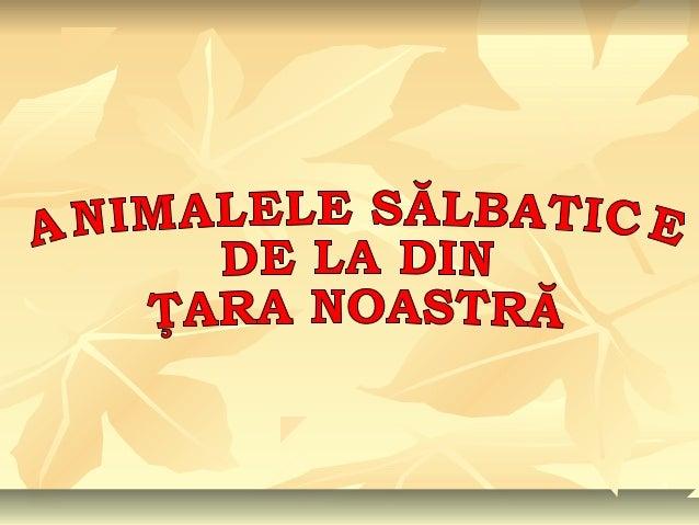 Animale Salbatice Din Romania 1