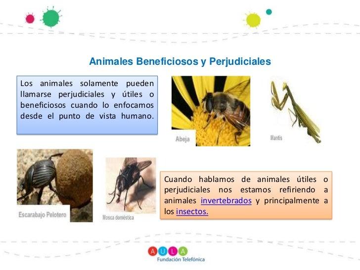 Animales Beneficiosos y PerjudicialesLos animales solamente puedenllamarse perjudiciales y útiles obeneficiosos cuando lo ...