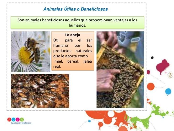 Animales Útiles o BeneficiososSon animales beneficiosos aquellos que proporcionan ventajas a los                          ...