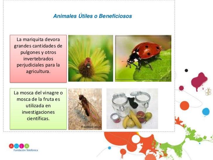 Animales Útiles o Beneficiosos La mariquita devoragrandes cantidades de   pulgones y otros    invertebrados perjudiciales ...