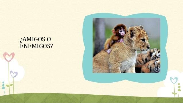 Animales cachorros Slide 2