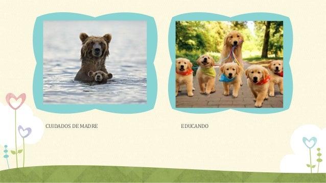 Animales cachorros Slide 3