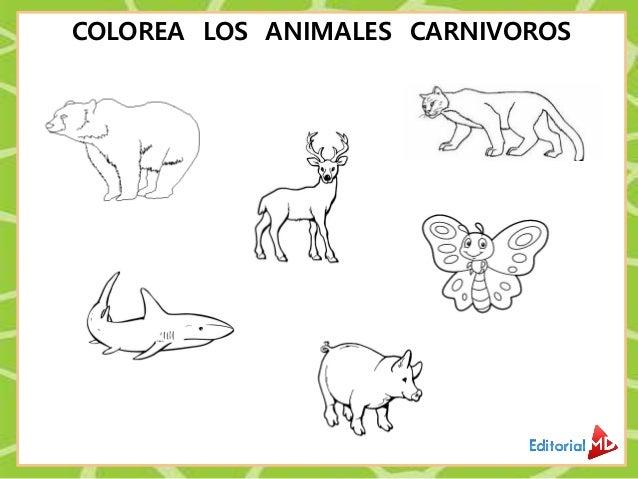 Animales Carnivoros Herbivoros Y Obnivoros