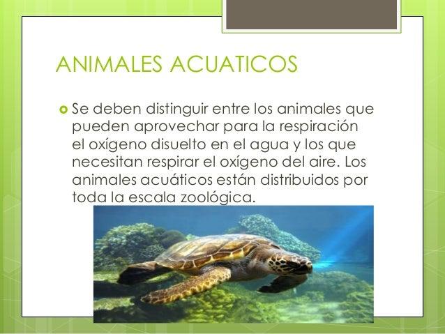 Animales cuadr pedos y v pedos for Peces que no necesitan oxigeno