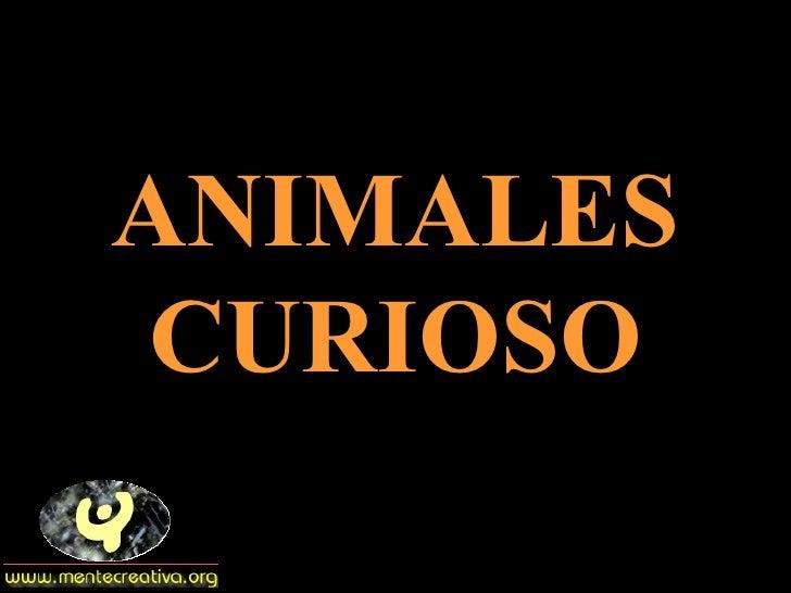 ANIMALES CURIOSO