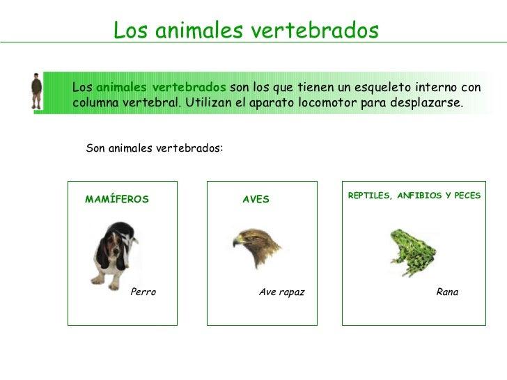 Los animales vertebrados Los  animales vertebrados  son los que tienen un esqueleto interno con columna vertebral. Utiliza...