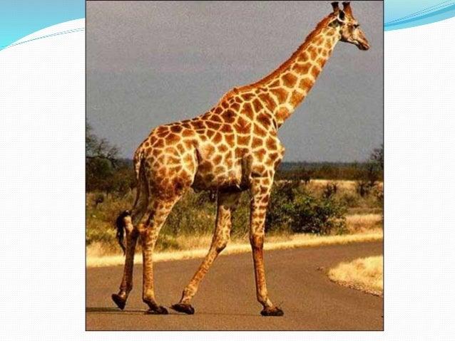 Animales de 2 y 4 patas - Precio de somier con patas ...