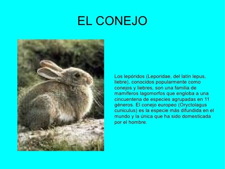 EL CONEJO Los lepóridos (Leporidae, del latín lepus, liebre), conocidos popularmente como conejos y liebres, son una famil...