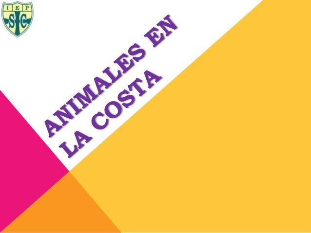 ANIMALES EN LA COSTAEn la costa se tiene unagran variedad de animalesterrestres, aves y animalesmarinos.PERU