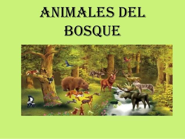 Animales Del Bosque Y Sabana
