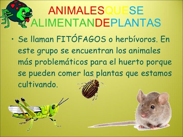 Animales del huerto de mi colegio for Como se llaman las plantas ornamentales