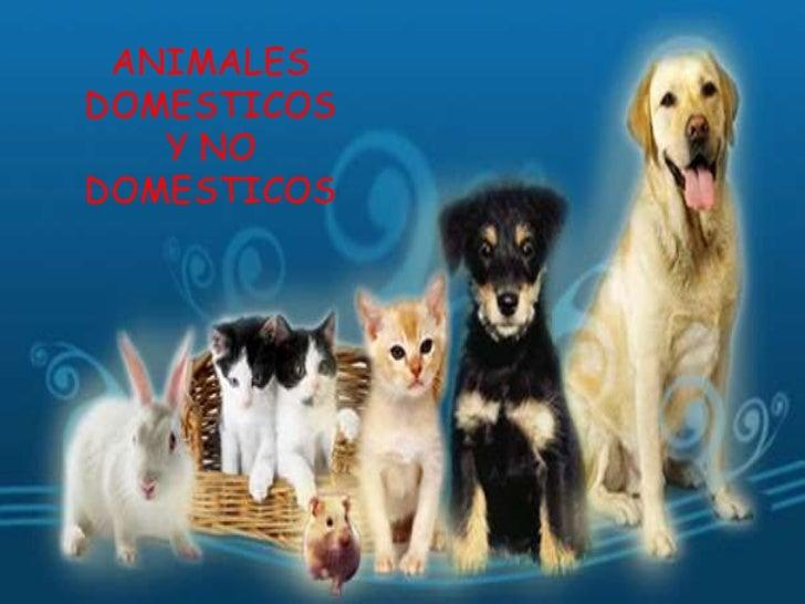 ANIMALES DOMESTICOS Y NO DOMESTICOS<br />