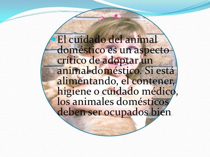 Animales domésticos Slide 2