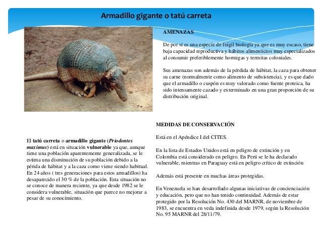 Animales en exticion Slide 2