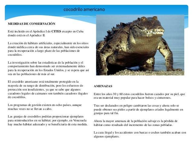 Animales en exticion Slide 3