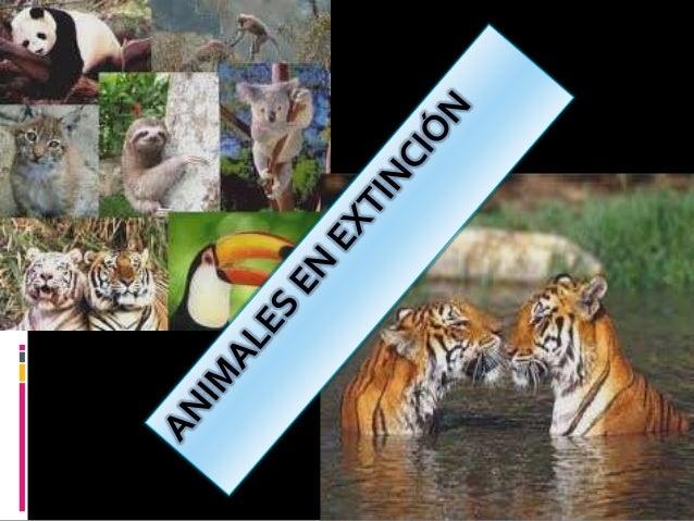 CONCEPTO:Las especies tanto animales como vegetales, seconsideran en peligro de extinción, cuando lacontinuidad su existen...
