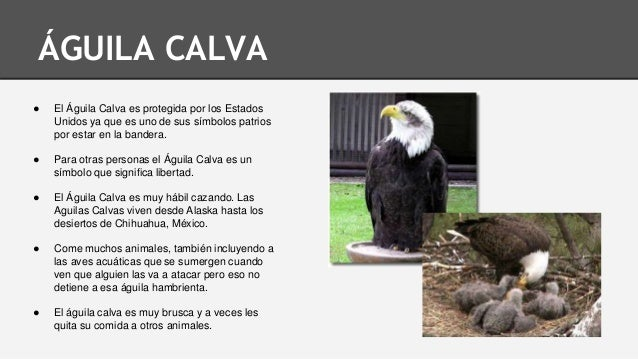 Donde Vive El Aguila. Awesome Que Come El Aguila With Donde Vive El ...