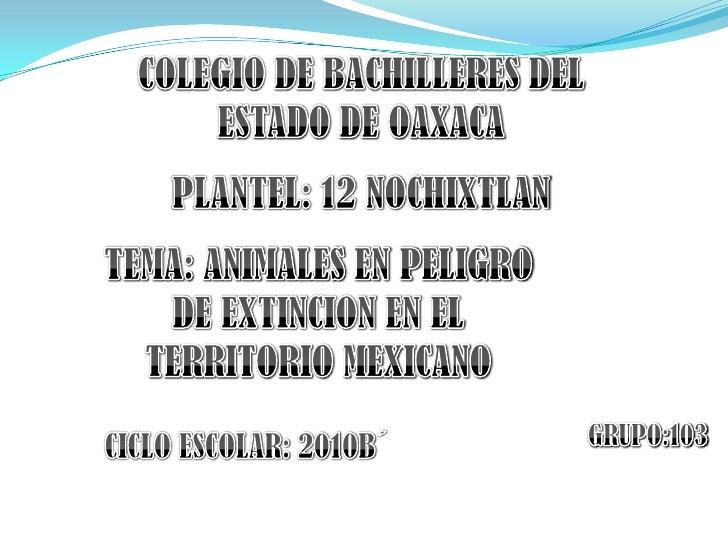COLEGIO DE BACHILLERES DEL ESTADO DE OAXACA<br />PLANTEL: 12 NOCHIXTLAN<br />TEMA: ANIMALES EN PELIGRO DE EXTINCION EN EL ...