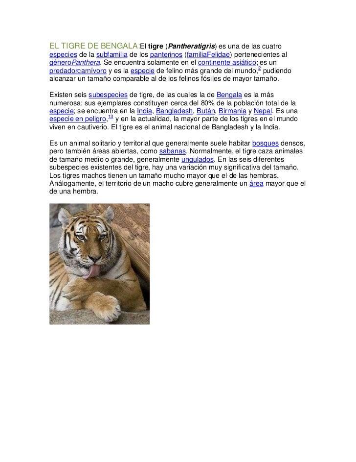 EL TIGRE DE BENGALA:El tigre (Pantheratigris) es una de las cuatroespecies de la subfamilia de los panterinos (familiaFeli...