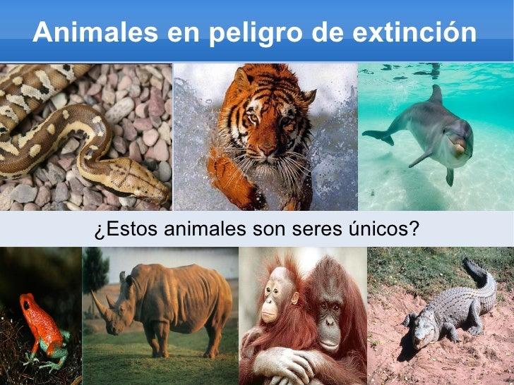 Animales en peligro de extinción ¿Estos animales son seres únicos?
