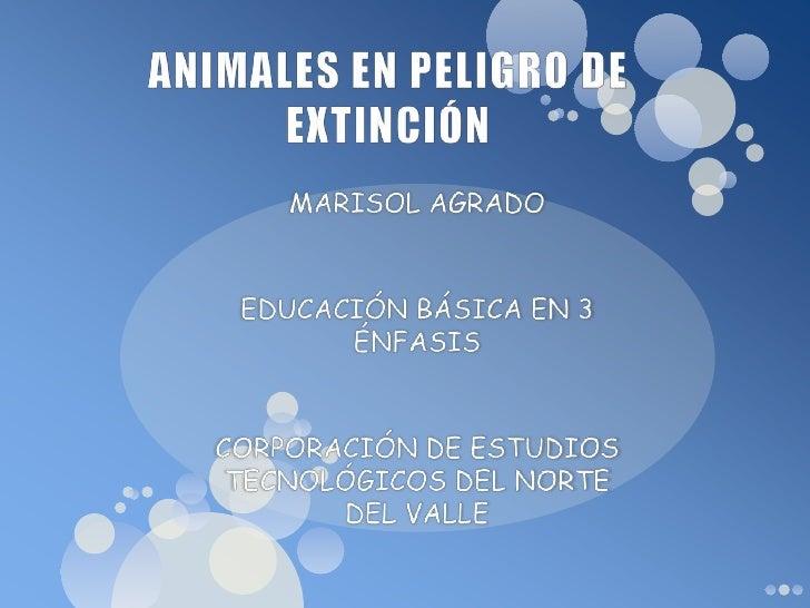 ANIMALES EN PELIGRO DE EXTINCIÓN<br />MARISOL AGRADO <br />EDUCACIÓN BÁSICA EN 3 ÉNFASIS<br />CORPORACIÓN DE ESTUDIOS TECN...