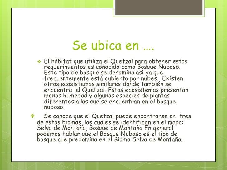 Se ubica en ….       El hábitat que utiliza el Quetzal para obtener estos        requerimientos es conocido como Bosque N...
