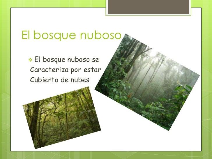 El bosque nuboso  El    bosque nuboso se Caracteriza por estar Cubierto de nubes