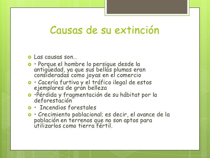 Causas de su extinción   Las causas son…   • Porque el hombre lo persigue desde la    antigüedad, ya que sus bellas plum...