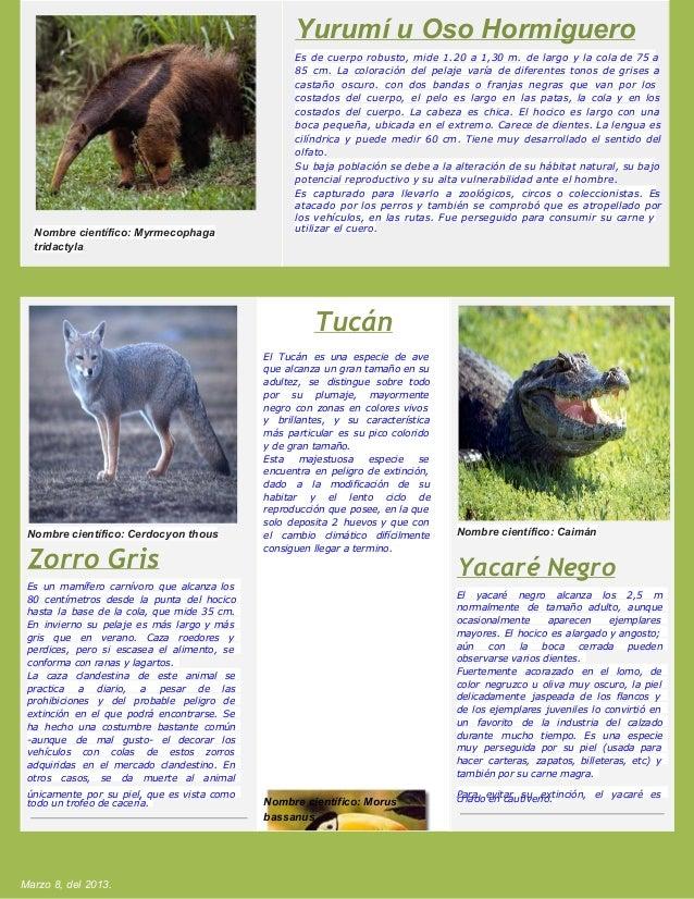 The best: lenguas en peligro de extincion yahoo dating
