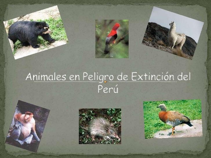 Animales en Peligro de Extinción del Perú<br />